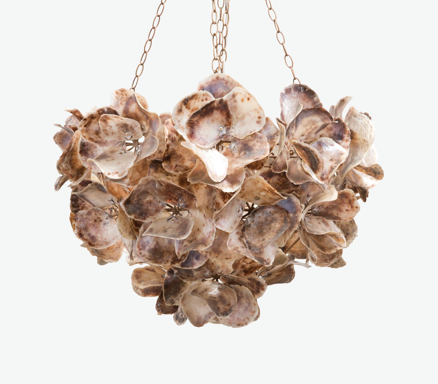 savannah chandelier shell home ideas design oyster